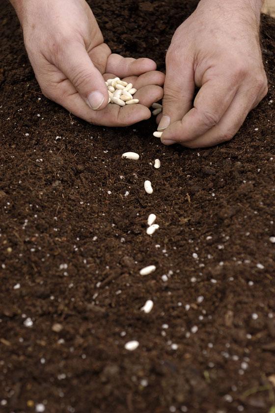 http://www.bing.com/images/search?q=planting&go=&qs=n&form=QBIR&pq=planting&sc=8-8&sp=-1&sk=#view=detail&id=EF2E2160B71D45033A290D5575EC09D4CB3C8049&selectedIndex=7