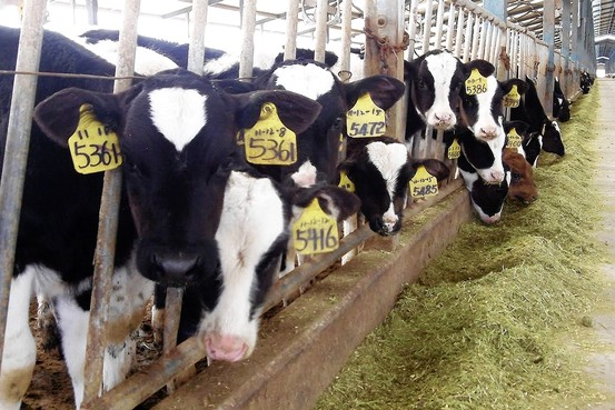 american dairy farms endless transformations of New video from dairy spot our farm has made many transformations throughout the years this award recognizes the hard work and dedication of dairy owners who have attractive, well-kept farms and promote a good dairy industry image.